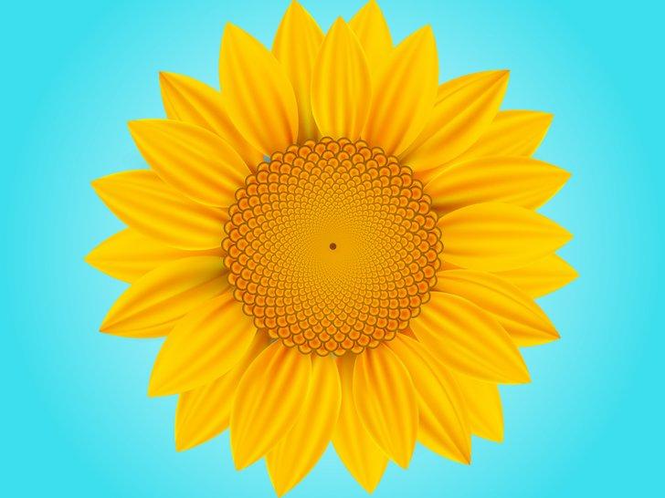 5 Filosofi Bunga Matahari yang Belum Banyak Diketahui