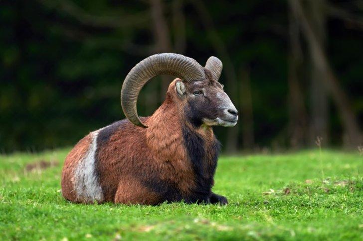 Jangan Lengah! Ini Ramalan Zodiak Aries Ditahun 2021
